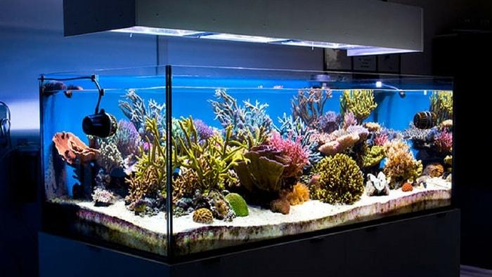 Acquario marino la guida completa al dsb perfetto for Acqua per acquario