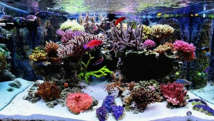 Piante Per Acquario Marino : Impostare un acquario marino la guida iniziale per l