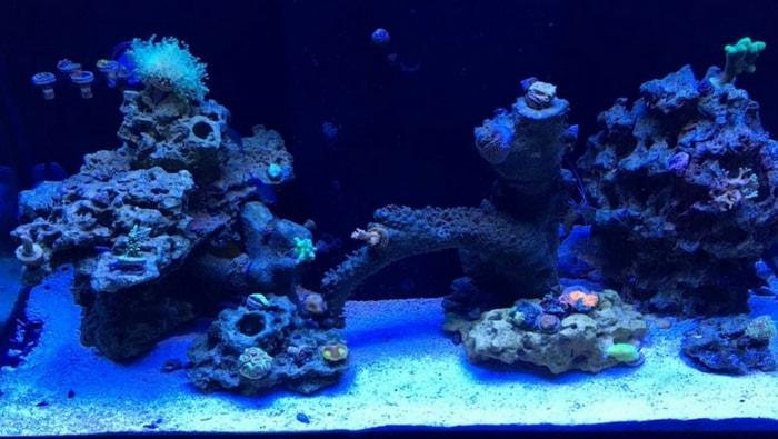 Layout acquario marino ecco alcuni suggerimenti efficaci for Pompette per acquari
